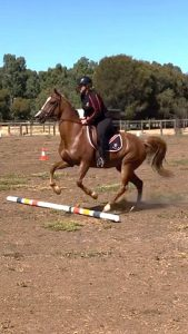 Globe Derby Pony Club - 13JAN19 - GDPC Rally 3