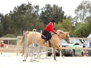 Globe Derby Pony Club - 17FEB19 - Metro Zone Showjumping Day 4