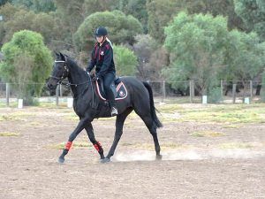 Globe Derby Pony Club - 10MAR19 - GDPC Rally With Audrey Nicolai 7
