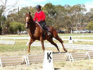 Globe Derby Pony Club - 07APR19 - Metro Zone Dressage Day 12