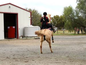 Globe Derby Pony Club - 12MAY19 - GDPC Rally 7