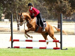 Globe Derby Pony Club - 20OCT19 - Zone Gymkhana 5